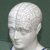 Model head to accompany the book Phrenology by L. N. Fowler