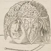 Dryander's dissection of the brain