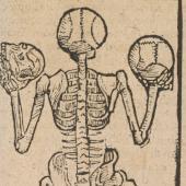 Bones in the Mondino tradition