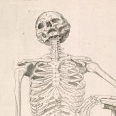 Coiter's skeleton with a scythe