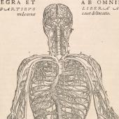 Vesalius's veins of the body