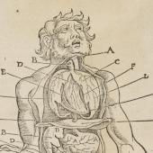 A dissected body (1517) copied by Ryff