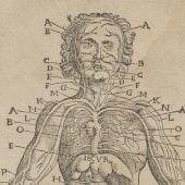 Vesalius's <em> Anatomical tables</em> plagiarized (2)