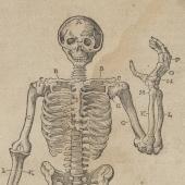 Vesalius's <em> Anatomical tables</em> plagiarized (1)
