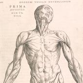 Gesturing bodies in the <em>Fabrica</em>
